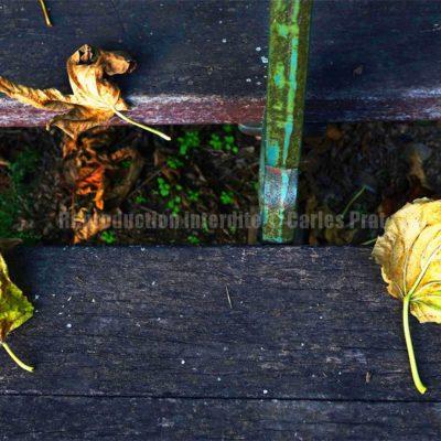 Feuilles I / Reproduction interdite © Carles Prat