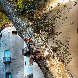 Carles Prat • Ceret, porte de France