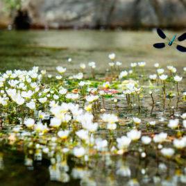 Carles Prat • Dragonfly I