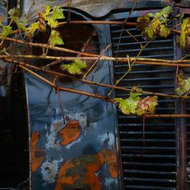 Carles Prat • Vineyards car